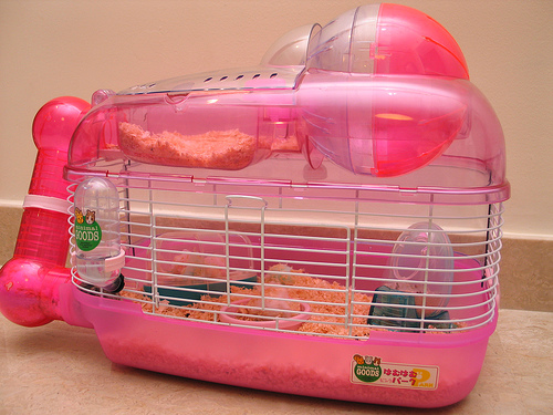 Hamster supplies in india, Hamster sale in chennai ...