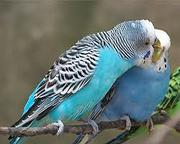 buying and selling birds in chennai