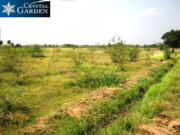 20 Acres of land for sale in Utiramerur, Chennai zone-Kanchipuram