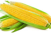 Top Maize exporter from Tamil Nadu: