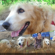 Shekas Dogs Training all kinds of dogs training in Chennai