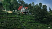Ecorganic - Best Cottages in Ooty,  Coonoor | Resorts in Coonoor