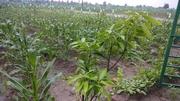 Farm Garder - Utthiramerur