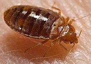 Bed bugs control services