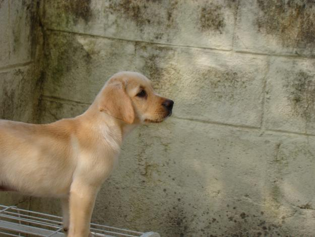 Dogs for sale, puppies for sale Tamil Nadu ads Tamil Nadu
